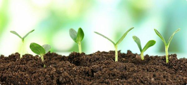 Cărat/adus pământ vegetal
