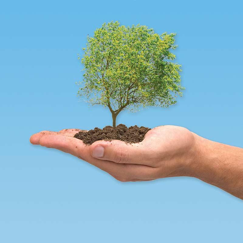 Plantări arbori, arbuşti şi flori