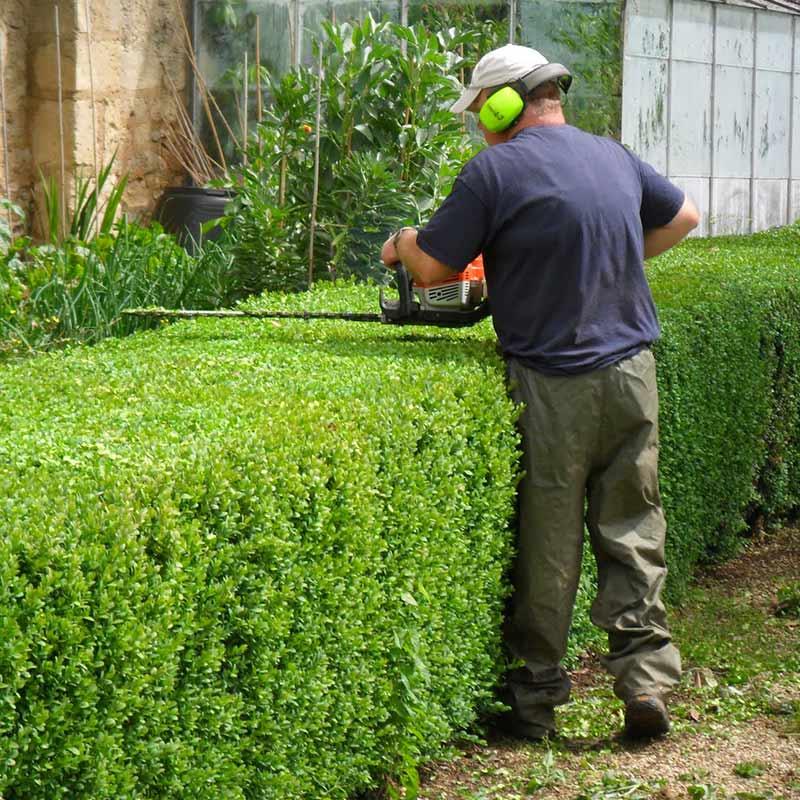 Tăieri garduri vii | perdele de plante